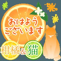 【敬語】柑橘系猫