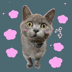 スコ猫写真スタンプ
