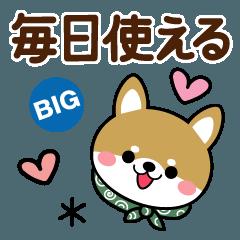 毎日使える敬語豆柴♡柴犬【BIG】