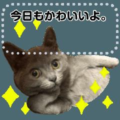 スコティッシュ猫写真スタンプ