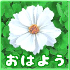 [LINEスタンプ] 大人やさしい大きな花のスタンプ