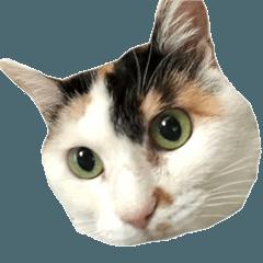 グラビューハート03(敬語)*保護猫応援*