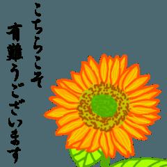 一筆箋『花』大人の日常会話