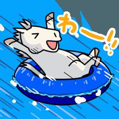 夏の芦毛さんたち